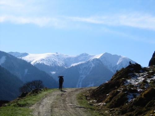 Foto: Christian Suschegg / Schneeschuh Tour / Ebeneck - Ochsenkopf - Zinken - Speiereck / Im unteren Bereich über Forststraßen bergan - im späteren Frühjahr bereits aper. / 19.01.2007 14:12:43