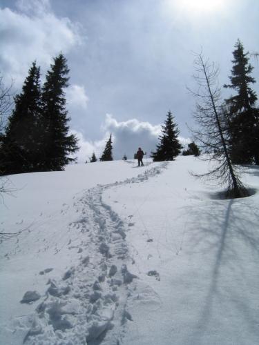 Foto: Christian Suschegg / Schneeschuhtour / Ebeneck - Ochsenkopf - Zinken - Speiereck / Abstieg über schönes, nicht allzu steiles Gelände zur Madelsgrubenalm. / 19.01.2007 14:07:38