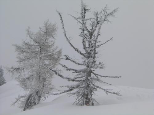 Foto: Christian Suschegg / Schneeschuhtour / Storingalm - Feldl / Unterwegs am weitgehend baumlosen, teilweise überwächteten und nach beiden Seiten steil abfallenden Grat am Feldl. / 21.01.2007 12:27:49