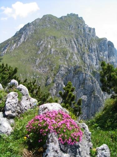 Foto: Christian Suschegg / Wander Tour / Krautschwellereck (1959m) / Blick vom blumenreichen Krautschwellereck zur Aufstiegsroute, die vor den Felswänden zu den Wiesenhängen am linken Bildrand führt. / 22.01.2007 11:49:30