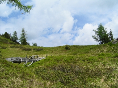 Foto: Christian Suschegg / Wandertour / Über die Knallalm auf Badstubenspitz und Scheiben / Oberhalb der Waldgrenze