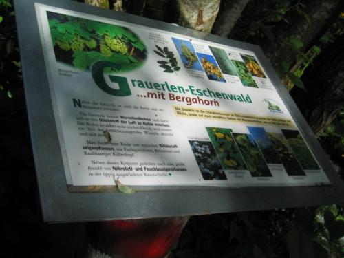 Foto: Christian Suschegg / Wander Tour / Über die Knallalm auf Badstubenspitz und Scheiben / Viele interessante Schautafeln säumen den Forstlehrpfad. / 23.01.2007 12:33:39