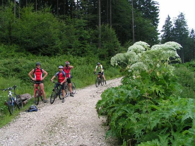 Foto: Jürgen Lindlbauer / Mountainbike Tour / Große Runde von Neukirchen über Hochkreut zu den Langbathseen / 01.08.2007 11:18:26