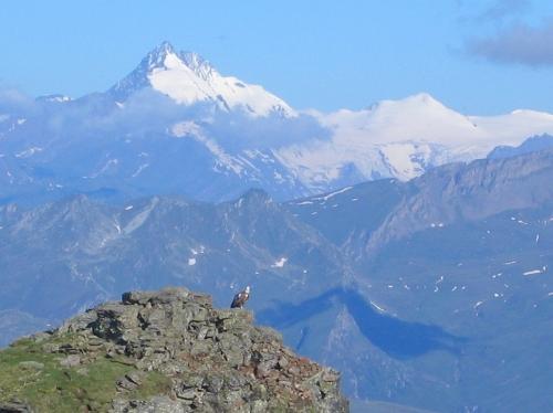 Foto: Christian Suschegg / Wander Tour / Vom Polinik zur Kreuzeck-Überschreitung / Vorne ein Geier - im Hintergrund die gletscherbedeckten höchsten Gipfel der Ankogelgruppe / 07.02.2007 09:43:50