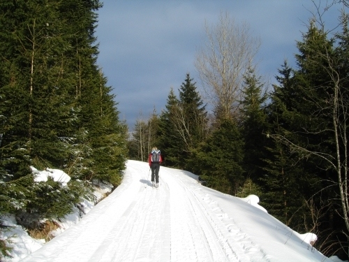Foto: Christian Suschegg / Ski Tour / Ahornkogl (2001m) / Im unteren Bereich über Forststraßen aufwärts - Sonne kann man hier nordseitenbedingt nur kurz genießen. / 12.02.2007 19:40:31