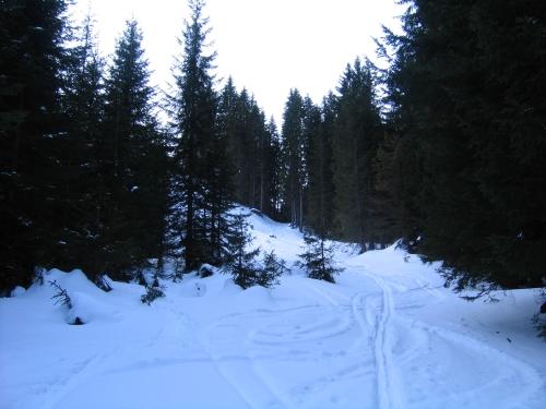 Foto: Christian Suschegg / Ski Tour / Ahornkogl (2001m) / Abkürzung über einen Ziehweg zur Ahornkoglalm. / 12.02.2007 19:39:42