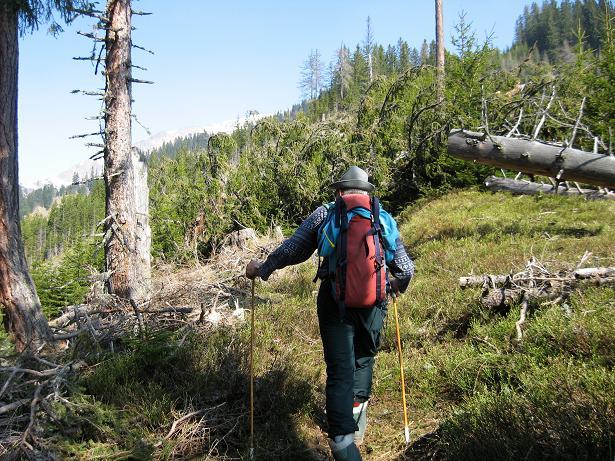 Foto: Andreas Koller / Wander Tour / Zeiritzkampel aus der Kurzen Teichen (2126 m) / Durch urwüchsigen Wald zieht sich die schöne Route / 22.04.2007 14:33:06