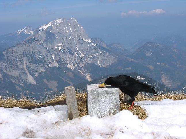 Foto: Andreas Koller / Wander Tour / Zeiritzkampel aus der Kurzen Teichen (2126 m) / Geteilte Gipfeljause mit Blick auf den Lugauer (2217 m) / 22.04.2007 14:29:13