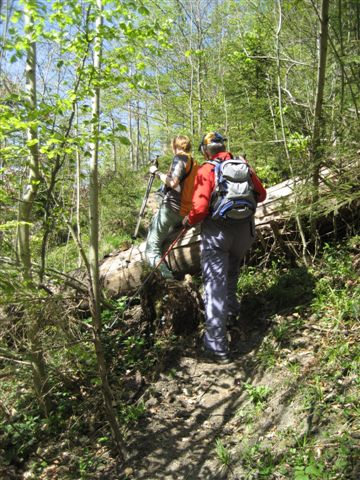 Foto: Jogal / Wander Tour / Von Scharnstein auf den Hochsalm / 22.04.2007 19:52:50