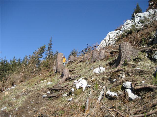 Foto: Jogal / Wander Tour / Von Scharnstein auf den Hochsalm / 22.04.2007 19:53:45
