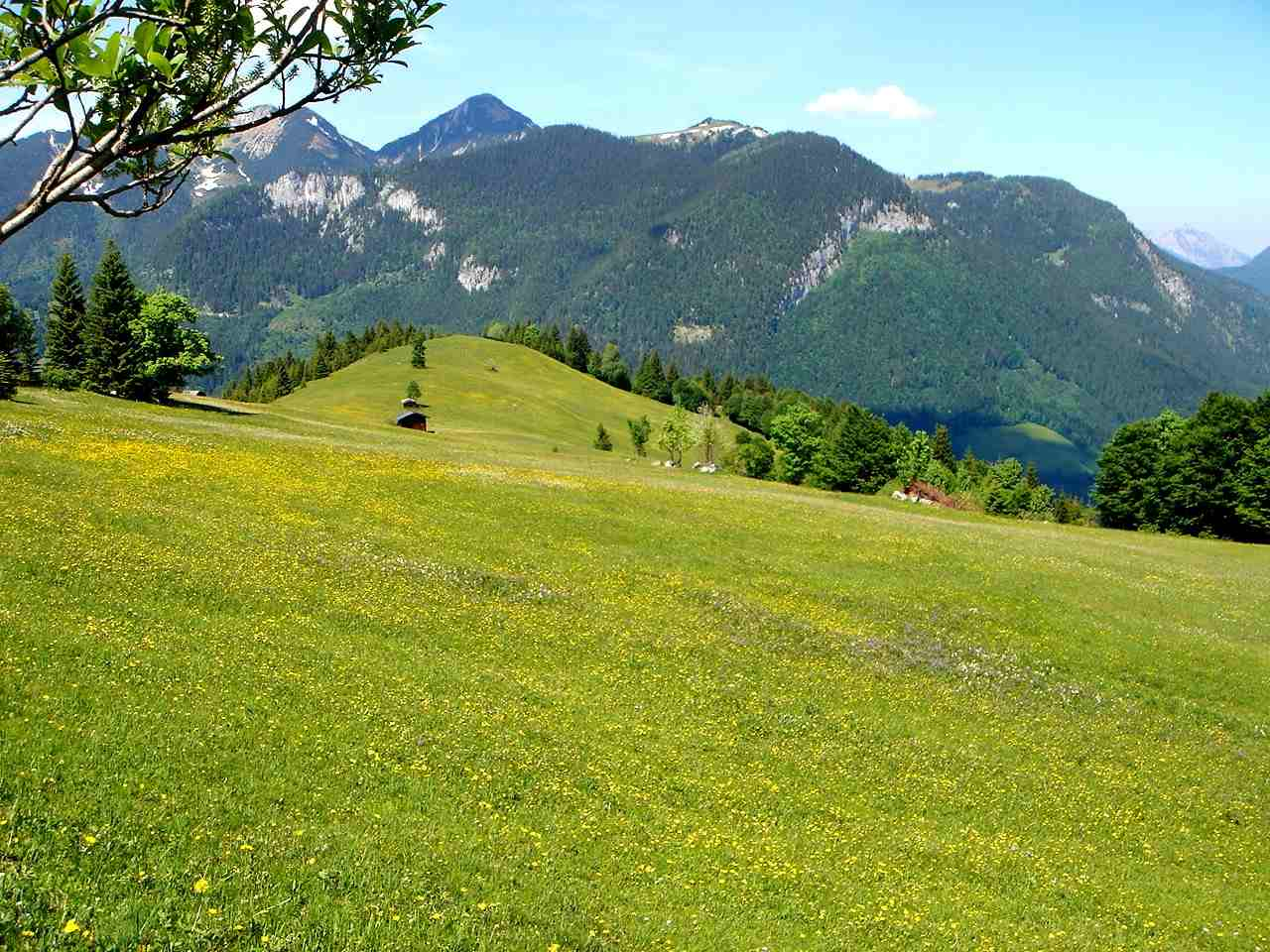 Foto: Manfred Karl / Wander Tour / Dietrichshorn (1542m) / Rückblick über die Hoisenhöhe zum Sonntagshorn und Peitingköpfl. / 26.04.2007 20:30:20