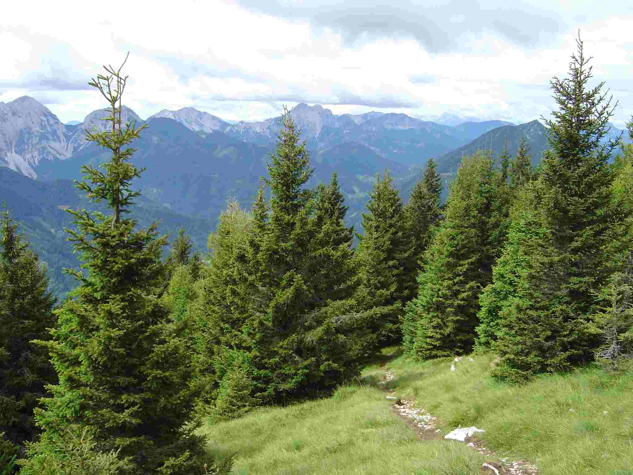 Foto: Manfred Karl / Wander Tour / Freiberg (Setitsche), 1923 m / Am Beginn der Almwiesen, die zum Gipfel hinaufleiten. / 05.05.2007 18:36:58