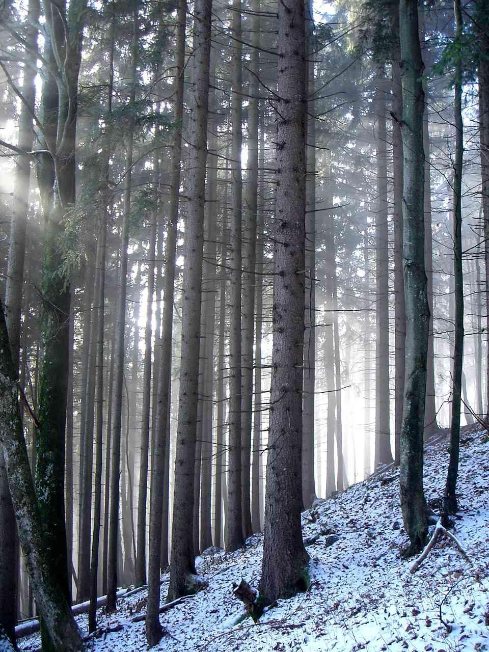 Foto: Manfred Karl / Wander Tour / Von der Padinger Alm auf den Hochstaufen / Staufenimpressionen - etwas oberhalb der Padinger Alm / 18.05.2007 06:59:02