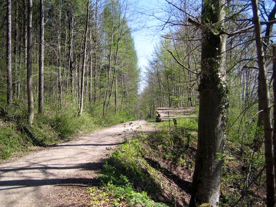 Foto: letsgoactive / Mountainbike Tour / Rund um den Staufen / Oberhalb der Salach führt der Weg in Richtung Listsee / 06.05.2007 16:40:54