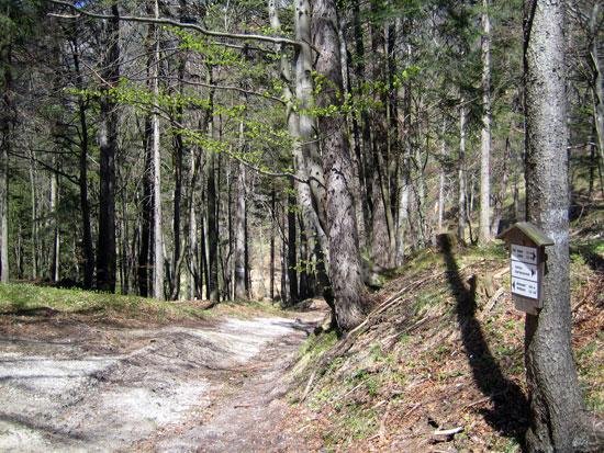 Foto: letsgoactive / Mountainbike Tour / Rund um den Staufen / Der Weg nach unten in Richtung Parkplatz Jochberg / 06.05.2007 16:45:52