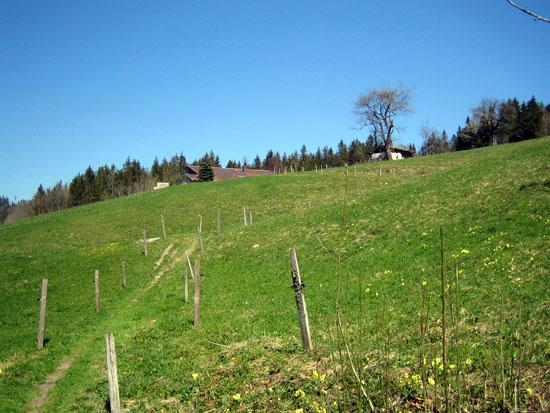 Foto: letsgoactive / Mountainbike Tour / Rund um den Staufen / Rauf am Wiesenweg, vorbei beim Bauern und im Wald rechts abbiegen!! / 06.05.2007 16:49:03