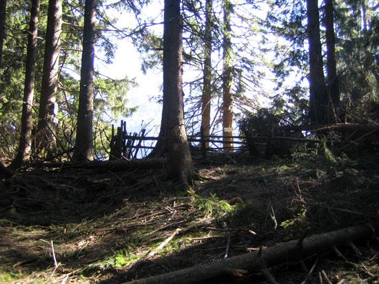 Foto: letsgoactive / Mountainbike Tour / Rund um den Staufen / Schon schimmert der Hochstaufen durch die Bäume. Die letzte Steigung ist geschafft. / 06.05.2007 16:51:53