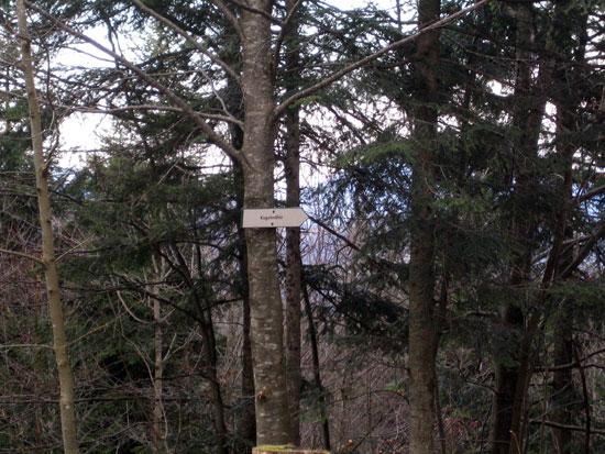 Foto: letsgoactive / Mountainbike Tour / Rund um den Untersberg / Der entscheidende Wegweiser nach unten. Falls Du den nicht siehst, bist falsch. / 06.05.2007 17:22:07