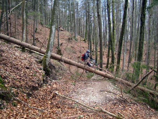 Foto: letsgoactive / Mountainbike Tour / Rund um den Untersberg / Nur kleine Gruesse von Kyrill auf dieser Seite des Berges. / 06.05.2007 17:23:45