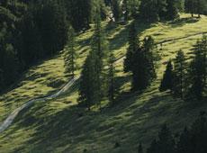 Foto: Tirol Werbung / Wander Tour / Adlerweg Etappe 22 - Felsen, Eis und grüne Wiesen / 26.07.2007 09:54:12