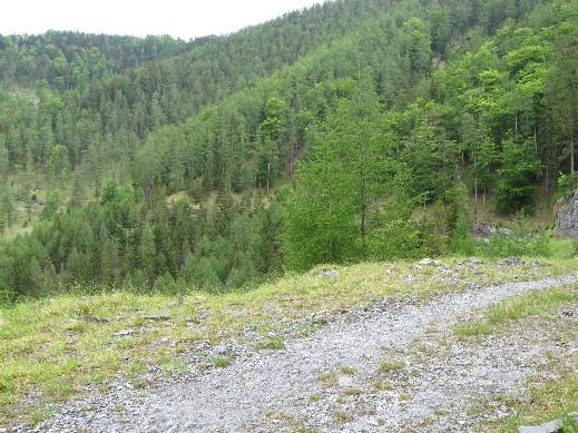 Foto: mucho / Mountainbike Tour / Zetz (nur als Wanderung möglich, keine Mountainbike Tour) / Alles Wald / 25.05.2007 19:49:31