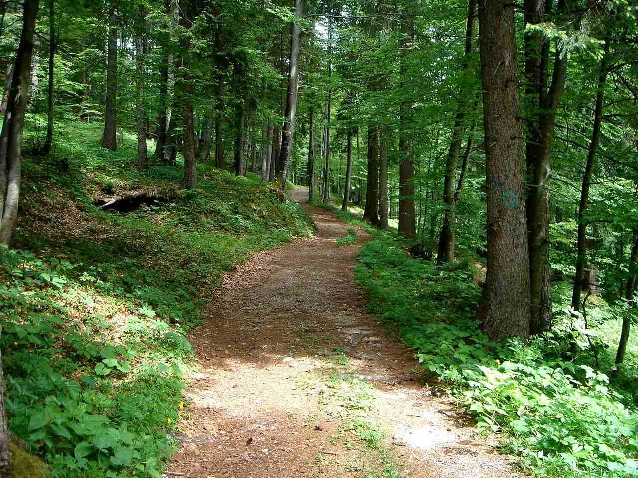 Foto: Manfred Karl / Wander Tour / Törlkopf, 1704 m / Schattige Waldwege ermöglichen auch im Hochsommer einen angenehmen Aufstieg. / 03.06.2007 20:38:51