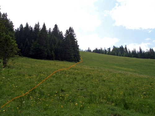 Foto: vince 51 / Wander Tour / Auf den Sorgschrofen (1638m) / Hier gehts lang / 03.06.2007 21:28:14