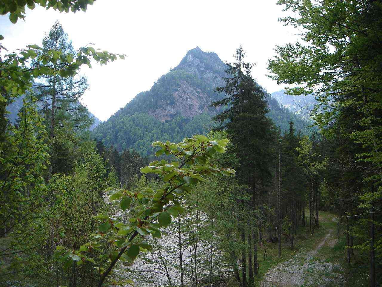 Foto: Manfred Karl / Mountainbike Tour / Saurüsselkopf (1270m) / Saurüsselkopf / 19.06.2007 06:13:27