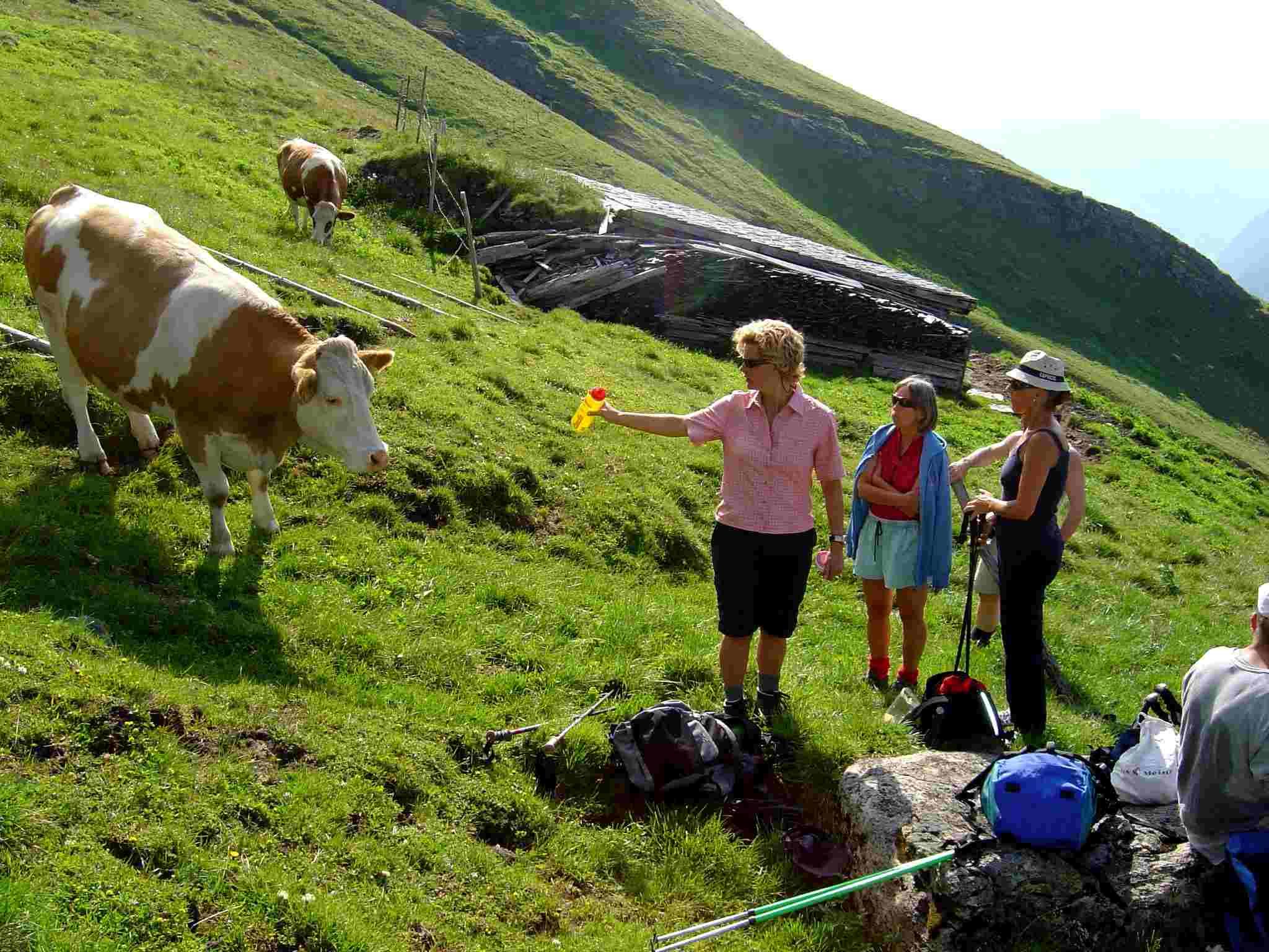 Foto: Manfred Karl / Wander Tour / Über Blumenwiesen auf die Racherin / Durstig? / 17.06.2007 06:39:04