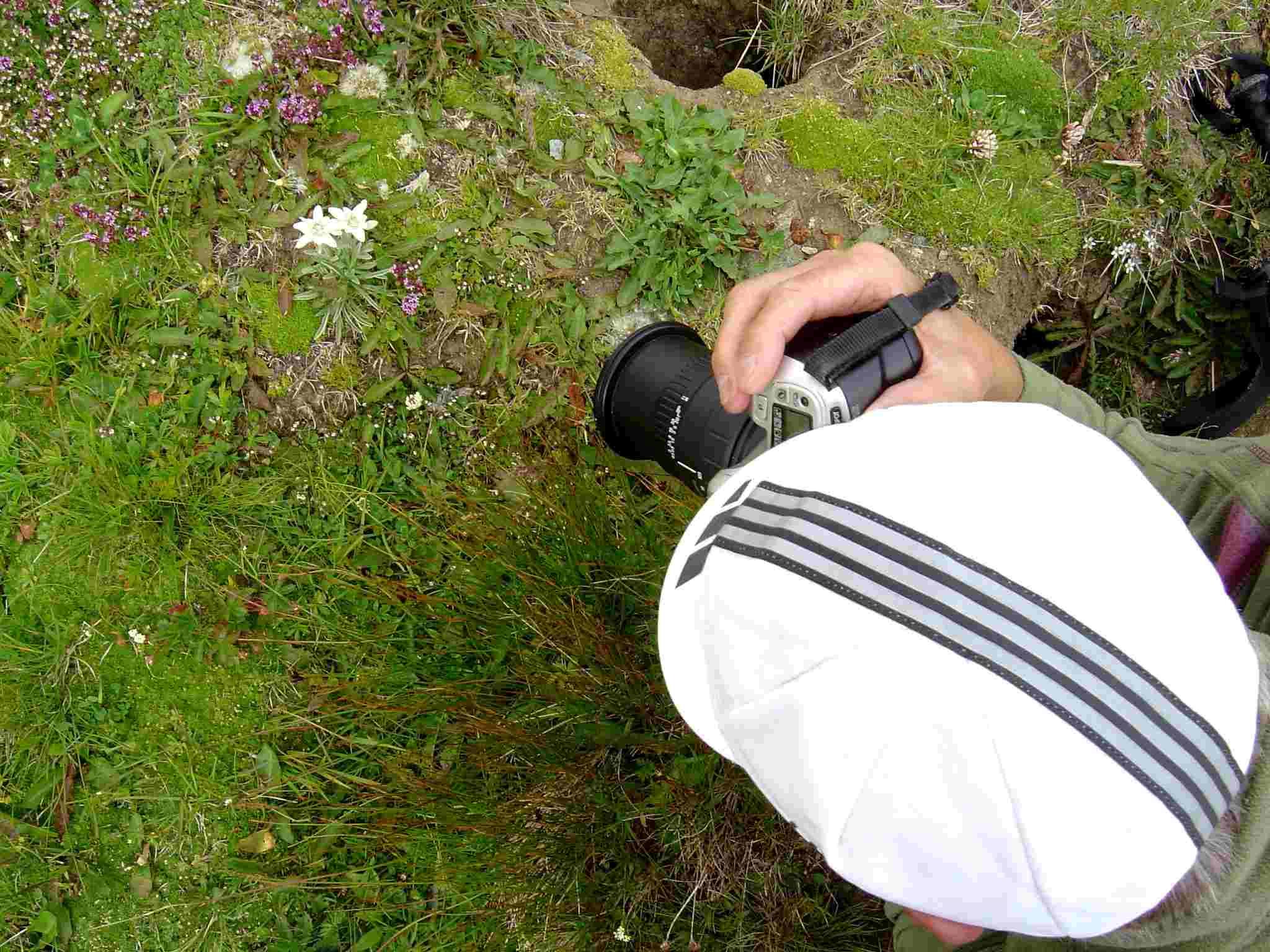 Foto: Manfred Karl / Wander Tour / Über Blumenwiesen auf die Racherin / Das muss man einfach fotografieren! / 17.06.2007 06:15:08