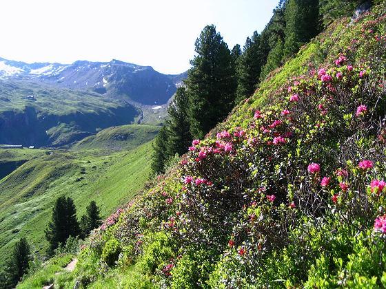 Foto: Andreas Koller / Wander Tour / Ahornspitze und Popbergschneid (2976m) / Der Hüttenanstieg / 18.06.2007 17:59:15