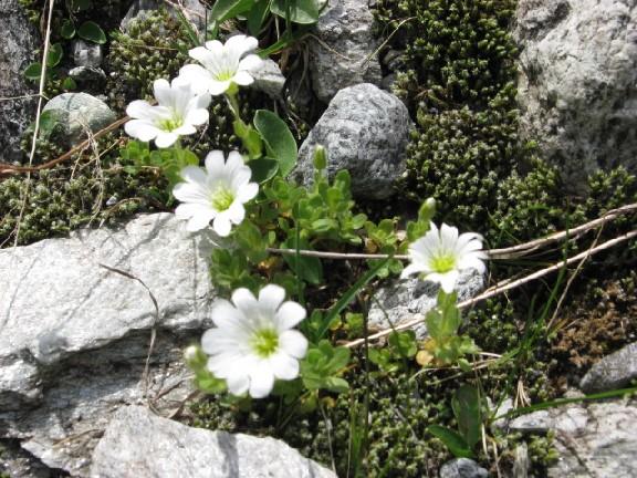 Foto: mucho / Mountainbiketour / Schönachtal / Auch im Kleinen liegt Schönheit / 18.06.2007 18:58:02