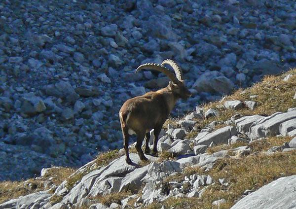 Foto: vince 51 / Wandertour / Vier-Gipfel-Tour von der Memminger Hütte / 19.06.2007 21:55:18