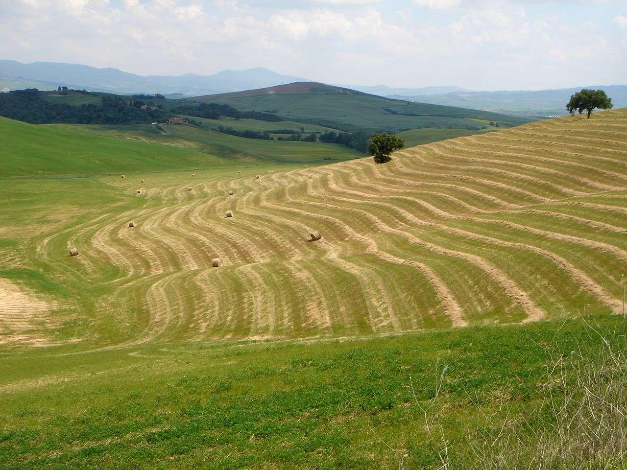 Foto: Manfred Karl / Mountainbike Tour / Von Bagno Vignoni nach Pienza / 20.06.2007 17:45:11