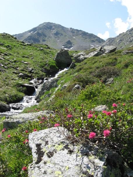 Foto: mucho / Mountainbike Tour / Stumm Kothüttenalm Hemereralm Torhelm / Torhelm rechts Maurerschartl, links Öfelerscharte Natur pur und Ruhe / 20.06.2007 19:57:40