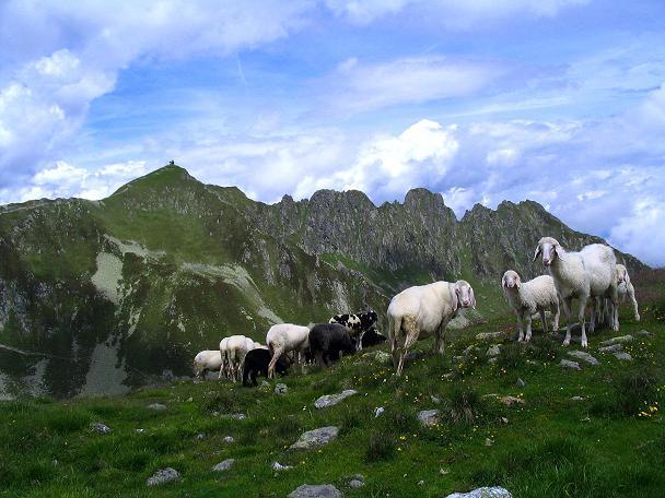 Foto: Andreas Koller / Wander Tour / Vom Loassattel über das Kellerjoch zum Spieljoch (2344 m) / Schafe am Kuhmesser gegen Kellerjoch (Kreuzjoch) / 03.07.2007 12:45:59