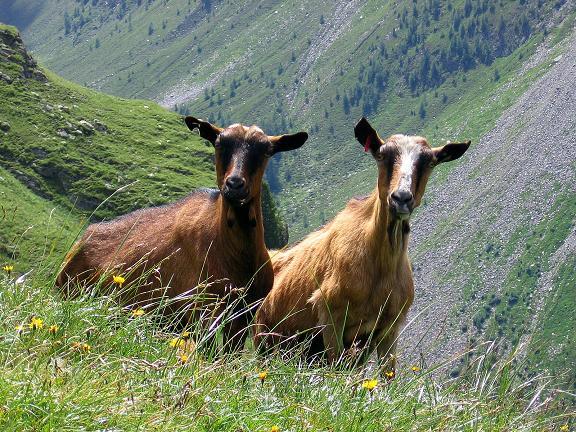 Foto: Andreas Koller / Wander Tour / Durch das Arntal auf die Weiße Spitze (2963 m) / Begegnung der tierischen Art / 10.07.2007 17:54:04
