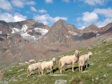Foto: Tirol Werbung / Wander Tour / Adlerweg Etappe 51 - Im Schatten der Ötztaler Wildspitze / Weisskar / 26.07.2007 13:48:48