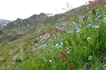 Foto: Tirol Werbung / Mountainbike Tour / Bike Trail Tirol Etappe Lanersbach – Geiseljoch - Weerberg / Bergwiese / 23.07.2007 08:11:40