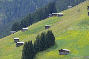Foto: Tirol Werbung / Mountainbiketour / Bike Trail Tirol Etappe Lanersbach – Geiseljoch - Weerberg / Wiese über Lanersbach / 23.07.2007 08:12:33