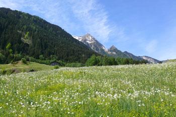Foto: Tirol Werbung / Mountainbike Tour / Bike Trail Tirol Etappe Mayrhofen - Lanersbach / 23.07.2007 08:15:37