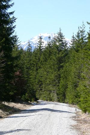 Foto: Tirol Werbung / Mountainbike Tour / Bike Trail Tirol Etappe Weissenbach - Reutte / Im Klausenwald / 23.07.2007 11:08:50