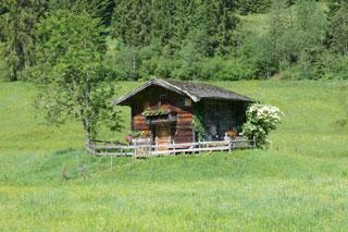 Foto: Tirol Werbung / Mountainbike Tour / Bike Trail Tirol Etappe Kirchberg - Neukirchen / 14.08.2007 08:37:16