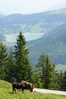 Foto: Tirol Werbung / Mountainbike Tour / Bike Trail Tirol Etappe Neukirchen - Zell / 14.08.2007 09:01:03
