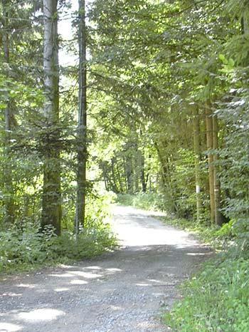 Foto: Barbara Grobbauer / Nordic Walking Tour / ApfelLand Stubenbergsee: Teichrunde / Weg nach Schielleiten / 13.08.2007 10:39:19