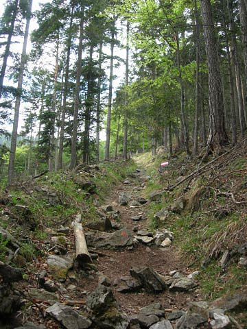 Foto: Barbara Grobbauer / Nordic Walking Tour / ApfelLand Stubenbergsee: Angerer Gipfeltour / Weh auf den Hohen Zetz / 13.08.2007 11:14:46