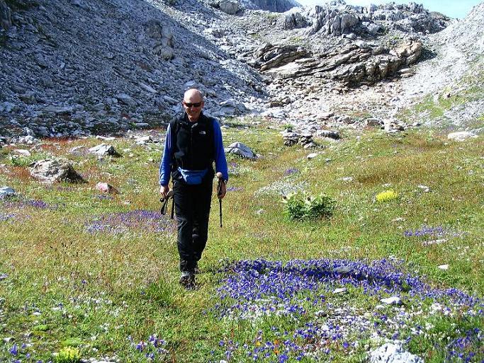 Foto: Andreas Koller / Wander Tour / Über die Franz Fischer Hütte auf den Faulkogel (2654 m) / Fantastische Alpenflora im Abstieg von der Windischscharte / 17.08.2007 11:04:59