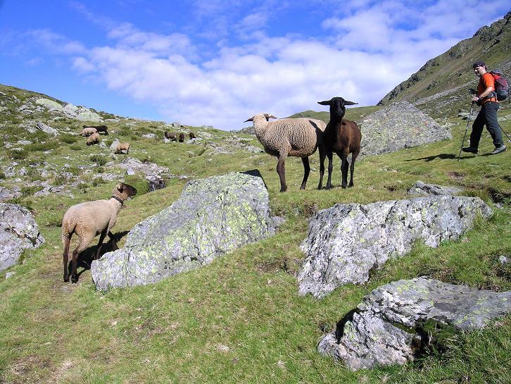 Foto: Andreas Koller / Wander Tour / Von Osttirol nach Kärnten auf den Kruckelkopf (3181 m)  / Gesellschaft im Aufstieg / 18.08.2007 13:23:45