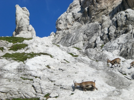 Foto: dobratsch11 / Klettersteig Tour / Über die Mosesscharte auf den Wischberg (Jòf Fuart) / Steinböcke bei der Mosesscharte / 20.08.2007 21:21:49