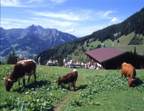 Foto: Kloiber Gabi / Wander Tour / Breitenebenalm - Karseggalm - Unterwandalm (Rundwanderung) / Karseggalm, 1.603 m  / 22.08.2007 17:40:50